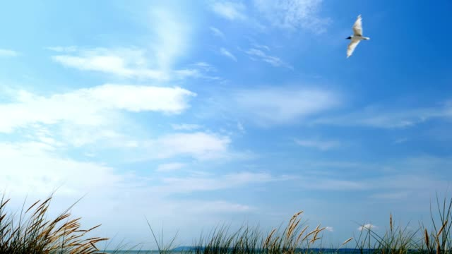 Seagull, blue sky, sand dunes and long grass.