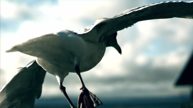 stockvideo's en b-roll-footage met seagull close - meeuw