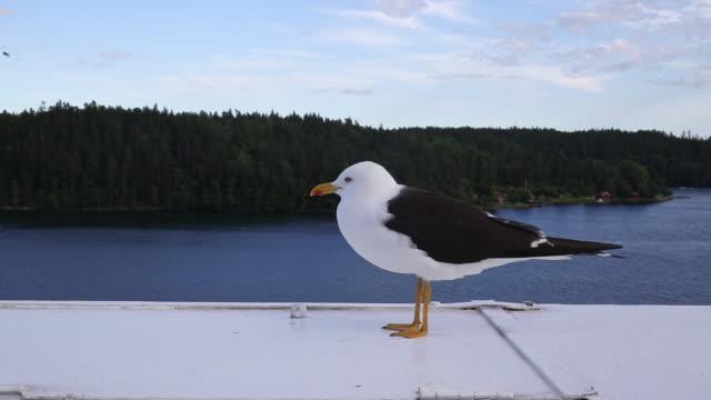 möwe genießt den wind während einer bootsfahrt - finnland stock-videos und b-roll-filmmaterial