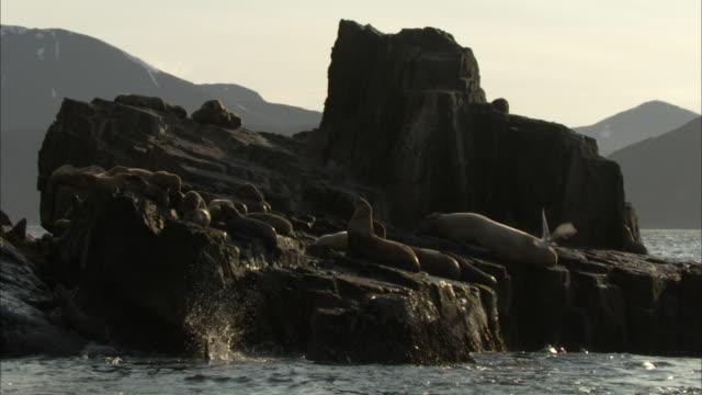 a seagull flies over a colony of sea lions basking along a rocky coastline. - アシカ点の映像素材/bロール