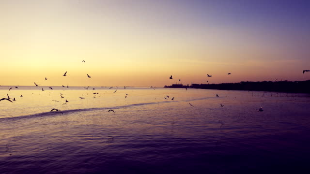 seagull fly near sea at sunset, color grading, samut prakan, thailand. - summer solstice stock videos and b-roll footage