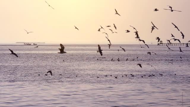 stockvideo's en b-roll-footage met slo mo seagull vliegen in de buurt van zee bij zonsondergang, color grading - zomerzonnewende