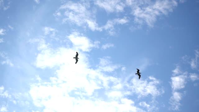 vídeos y material grabado en eventos de stock de gaviota volando en el cielo super cámara lenta - boca de animal
