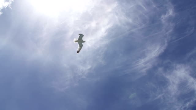 stockvideo's en b-roll-footage met seagull flying across the sky - laag camerastandpunt