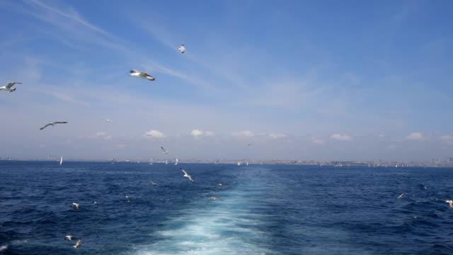 vídeos y material grabado en eventos de stock de gaviota volando detrás de la nave en el bósforo en estambul - velero