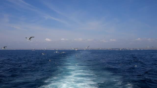 イスタンブールのボスポラス海峡で船の背後に飛んでいるカモメ - nautical vessel点の映像素材/bロール
