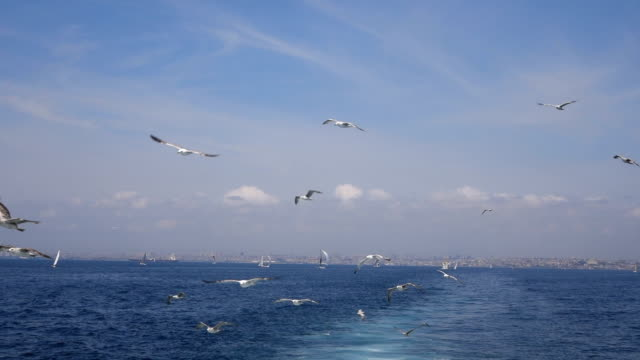 seagull flying behind the ship in istanbul - seagull stock videos & royalty-free footage