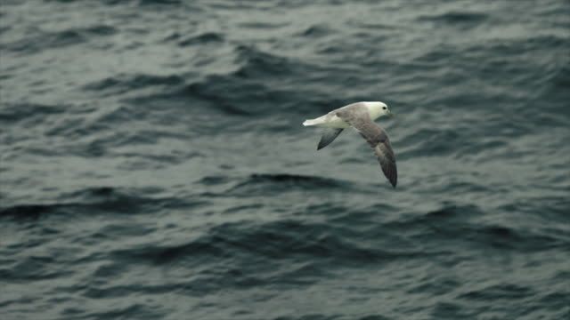 seagull flying in north sea: slow motion - seagull stock videos and b-roll footage