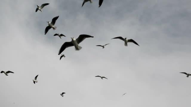 Seagull vliegen in de blauwe hemel