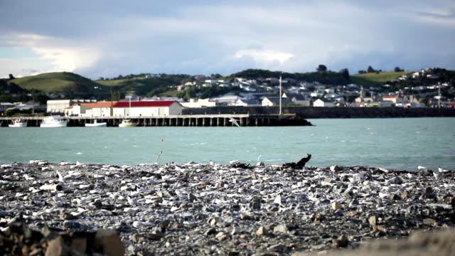 Seagull vliegen in de Pier
