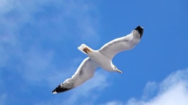 seagull flying in the sky - 翼を広げる点の映像素材/bロール