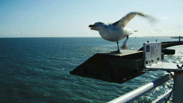 seagull flying off of ferry - distant stock videos & royalty-free footage