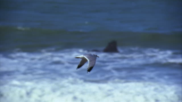 slo mo, pan seagull flying over ocean - aquatic organism stock videos & royalty-free footage