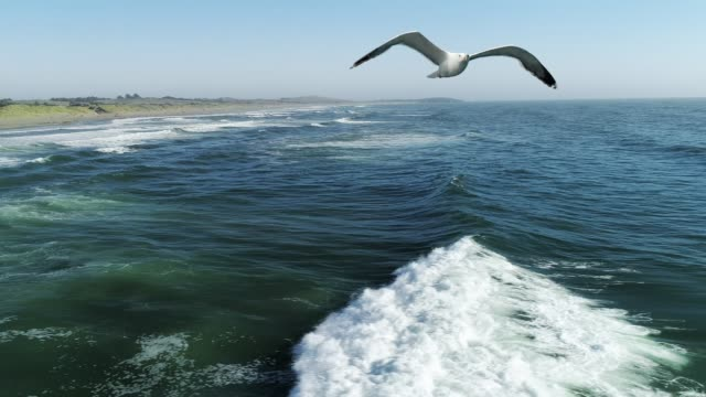 seagull flying over ocean waves - audio available stock videos & royalty-free footage