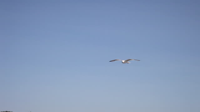stockvideo's en b-roll-footage met seagull flying over pasman island, kornati national park - meeuw