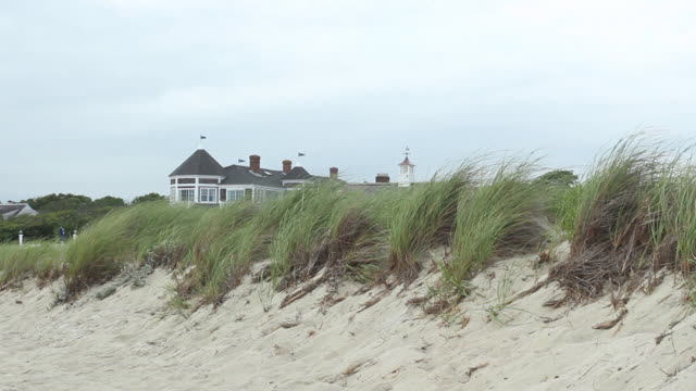 seagull flying over sand dunes, generic beach house - marram grass stock videos and b-roll footage
