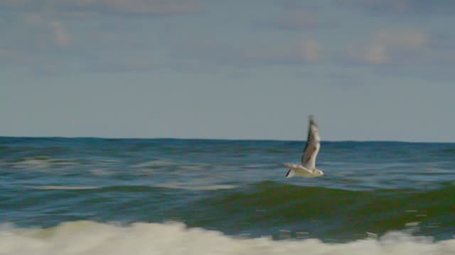 seagull flying over sea - sea water bird stock videos & royalty-free footage