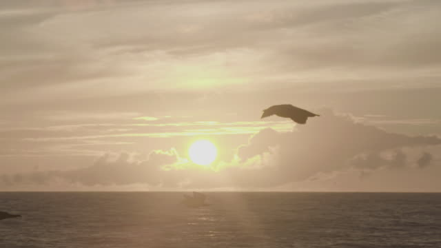 stockvideo's en b-roll-footage met seagull flying over the sea - back lit