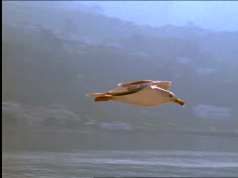 PAN seagull flying over water / hills in background / Greece
