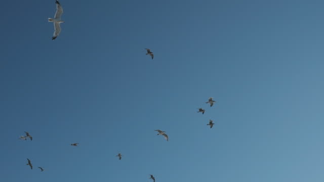seagull flying slow motion - coastal feature stock videos & royalty-free footage
