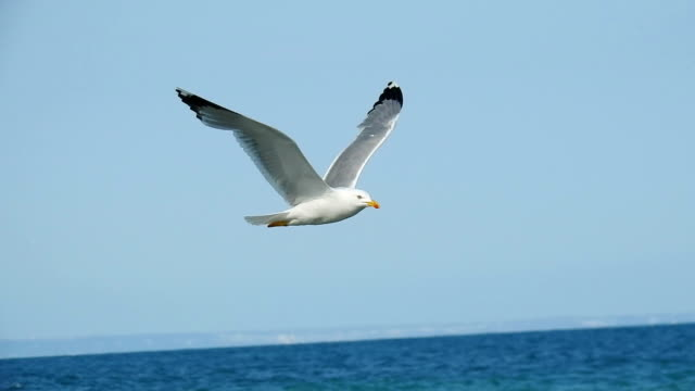 seagull flying - flying stock videos & royalty-free footage