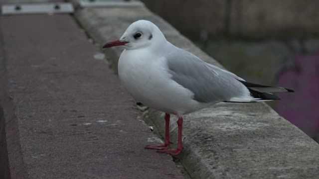 Seagull, Hamburg, Germany, Europe