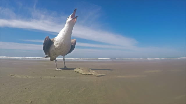 seagull in brazil - seagull stock videos and b-roll footage