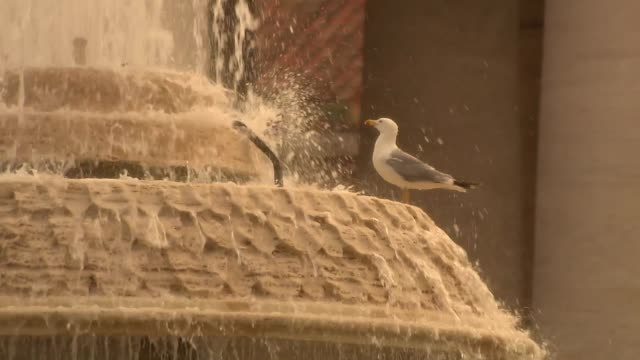 seagull in fountain - st peter's square stock videos & royalty-free footage