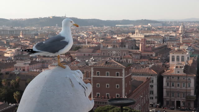 seagull in rome - seagull stock videos & royalty-free footage