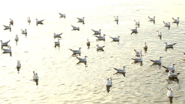 Seagull in het water