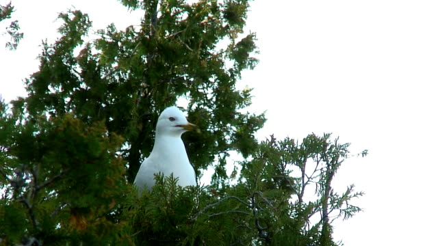 seagull in trees - named wilderness area stock videos & royalty-free footage