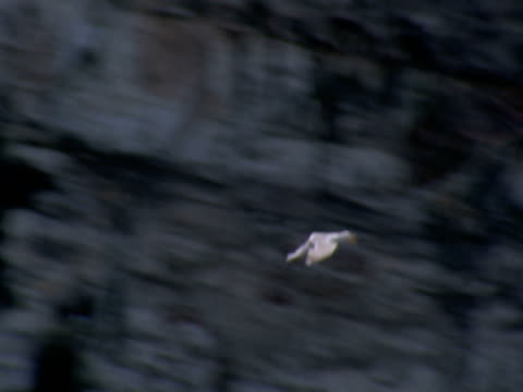 seagull, lands on cliff, safety, protection, family - ベンプトン点の映像素材/bロール