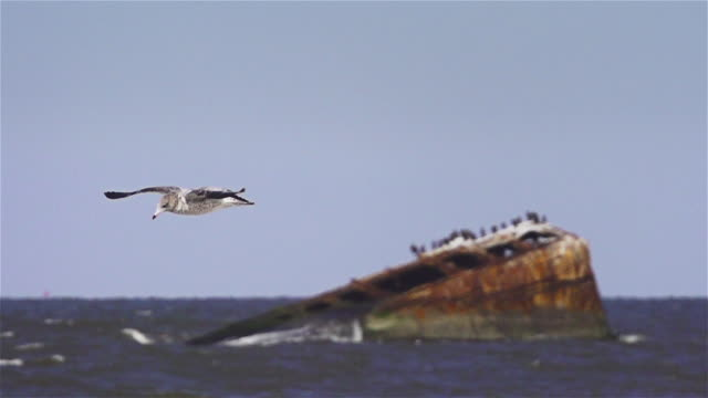MS PAN, seagull mid flight in slow motion over the ocean during the daytime.