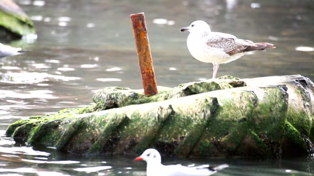 Seagull on dirty tire in polluted water