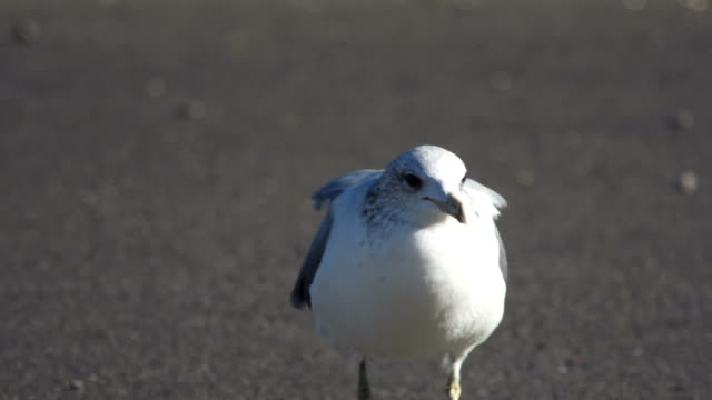 seagull on pavement - trapped stock videos & royalty-free footage
