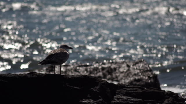 seagull on rock against out of focus surf - surf rock stock videos & royalty-free footage