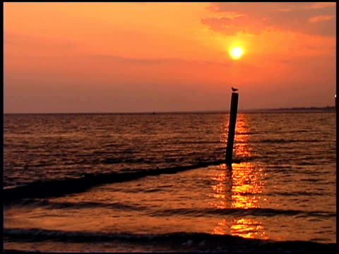 seagull on seashore, bald head island, north carolina - bald head island stock videos & royalty-free footage