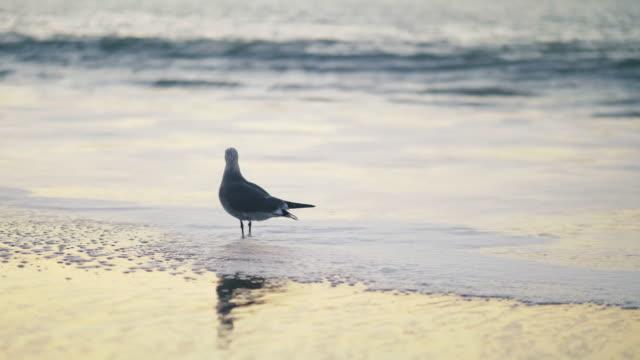 Zeemeeuw op het strand bij zonsondergang