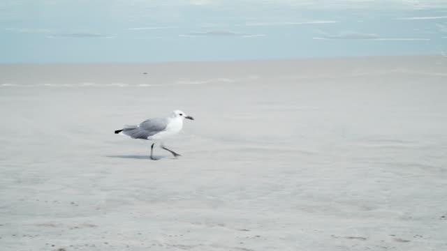 seagull on the beach - gabbiano video stock e b–roll