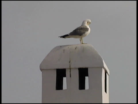 seagull on top of tower - letterbox format stock videos & royalty-free footage