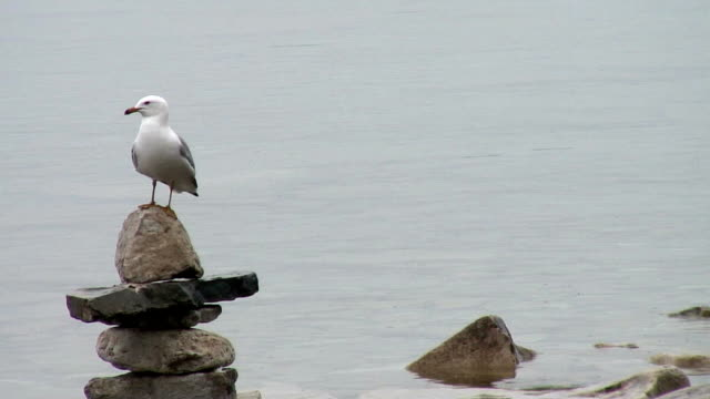 seagull perched - named wilderness area stock videos & royalty-free footage