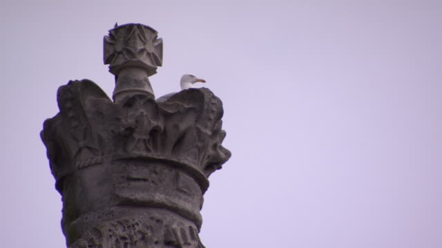 A seagull perches on a crown topping Dublin's Custom House, Republic of Ireland.