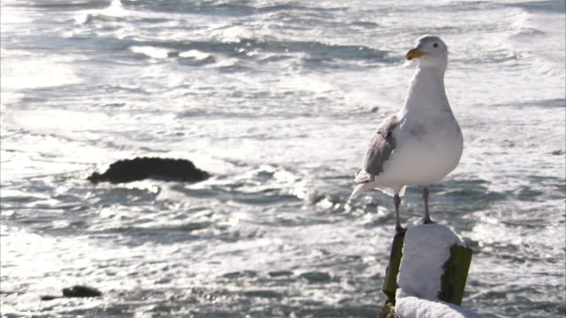 a seagull perches on a snowy post on the oregon coast. available in hd. - oregon coast stock videos & royalty-free footage