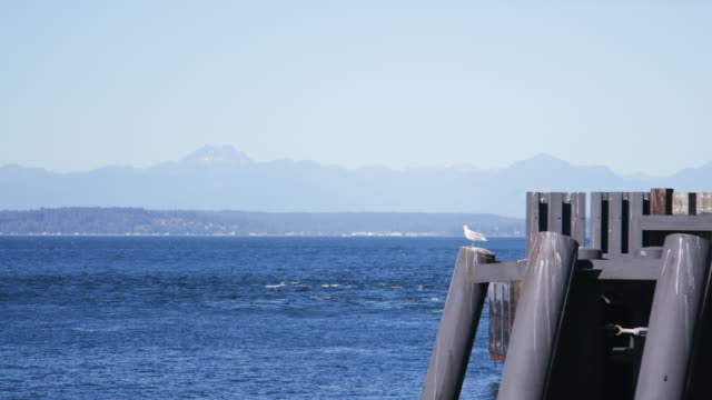 seagull perches on pier, washington state - nordpazifik stock-videos und b-roll-filmmaterial