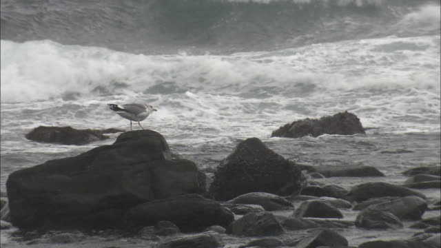 a seagull perching on a rock on the coast, ainoshima, fukuoka, japan - 福岡県点の映像素材/bロール