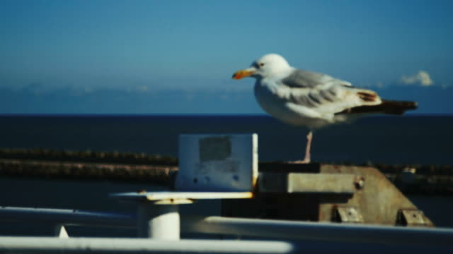 vídeos de stock e filmes b-roll de gaivota em repouso em ferry - navio de passageiros
