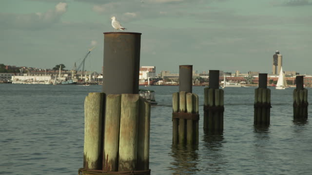 a seagull rests on a rusty bollard in boston harbor, massachusetts, usa. - medium group of objects stock videos & royalty-free footage