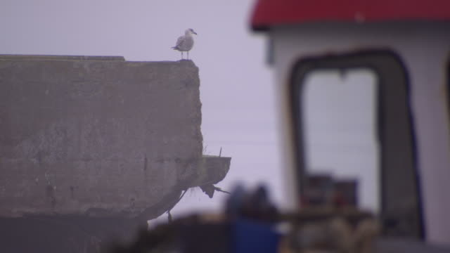 a seagull rests on the edge of a concrete wall overlooking the sea, cobh, county cork, ireland. - county cork stock videos & royalty-free footage