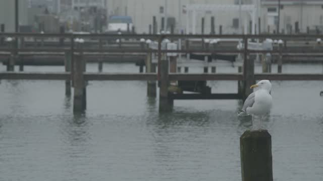 seagull sits perched on a pier amidst pandemic related restrictions on march 28, 2021 in chincoteague, virginia. there have been 546,299 covid-19... - appollaiarsi video stock e b–roll