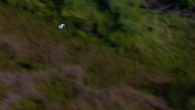 A seagull soars over the grassy wetlands of Cat Island in Mississippi.